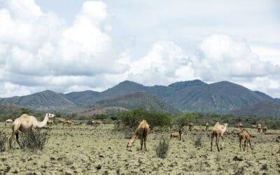 Kenya: die Technologie im Dienst der Tiergesundheit