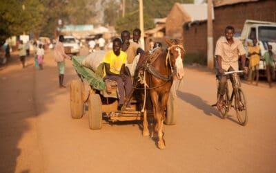 Im Südsudan sind Esel und Pferde überlebenswichtig