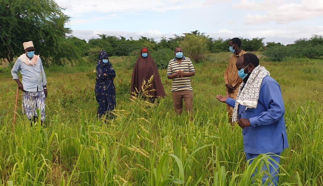 Ein Kurzbericht aus dem Leben eines Begünstigten unserer Projektarbeit in Somalia