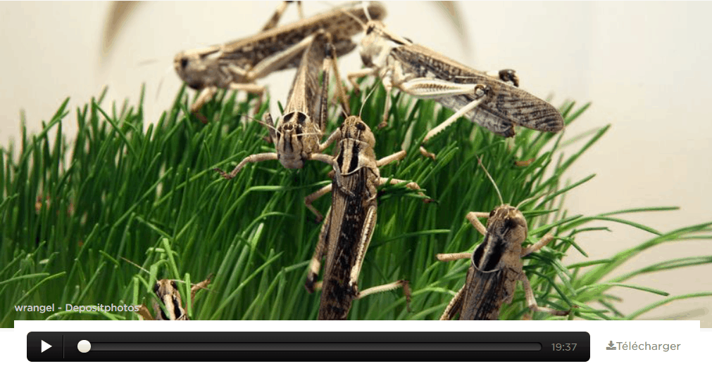 «In just one day the locusts destroy the livelihoods of 35,000 people!»